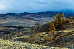 Алтай Горы Золотистая осень голубое небо Стоковые Фото