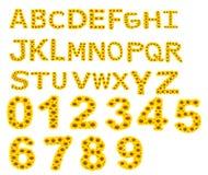 Алфавит ОТ НАЧАЛА ДО КОНЦА, солнцецвет изолированный на белой предпосылке Стоковая Фотография RF