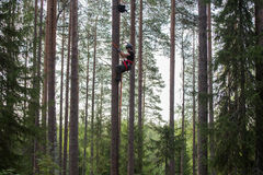 Альпинист дерева вверх в дереве с взбираясь шестерней Стоковая Фотография RF