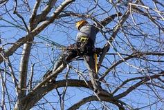 Альпинист дерева среди ветвей Стоковые Фотографии RF