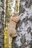 Альпинист кота Стоковая Фотография