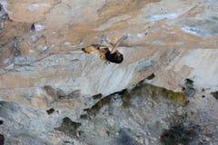Альпинист утеса, профессиональный спортсмен, взбираясь в горах весьма спорты стоковая фотография