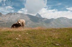 Альпы Стоковое фото RF