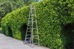 Алюминиевая лестница с зеленым цветом стены стоковые фото