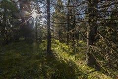 Аляска, последняя граница США Стоковые Изображения