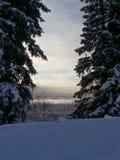 Аляскская зима Стоковые Изображения