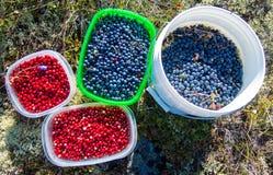 Аляскские одичалые ягоды Стоковое Фото