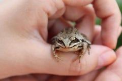 Fairy princess frog royalty free stock photos