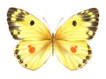 Бабочка акварели желтая иллюстратор иллюстрации руки чертежа угля щетки нарисованный как взгляд делает пастель к традиционному иллюстрация штока