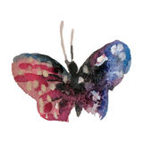 Бабочка акварели на белой иллюстрации предпосылки Стоковые Фотографии RF