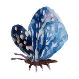 Бабочка акварели на белой иллюстрации предпосылки Стоковое Фото