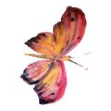 Бабочка акварели на белой иллюстрации предпосылки Стоковое Изображение RF