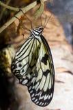 бабочка ветви Стоковое фото RF
