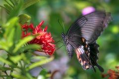 бабочка вибрируя Стоковые Изображения RF