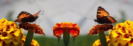 Бабочка встречи Стоковое фото RF