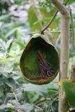 Бабочка выпивая снова Стоковые Изображения
