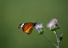 Бабочка в дереве Стоковая Фотография