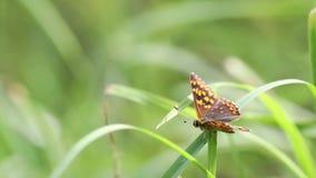 Бабочка в зеленом поле акции видеоматериалы