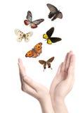 Бабочка в наличии Стоковая Фотография RF
