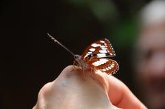 Бабочка в наличии закрывает вверх Стоковое Изображение RF