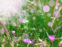 Бабочка в нежном Dreamland lilla Стоковые Фотографии RF