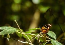 Бабочка в одичалом Стоковая Фотография RF