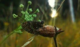 бабочка в падениях росы Стоковое Изображение RF