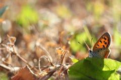 Бабочка в пинке #3 осени Стоковые Фотографии RF