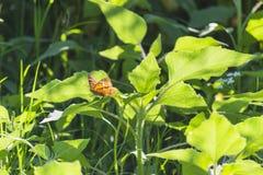 Бабочка в пределах зеленого цвета Стоковые Изображения
