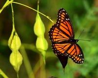 Бабочка в природе Стоковые Фото