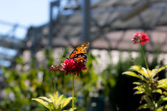 Бабочка в плене Стоковые Фотографии RF