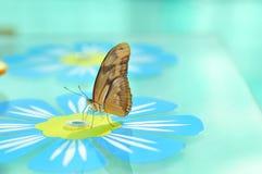 бабочка в реальном маштабе времени Стоковые Изображения RF