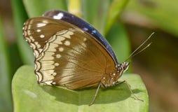Бабочка в саде Стоковые Изображения