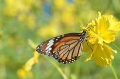 Бабочка в саде Стоковое Изображение RF