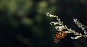 Бабочка в солнечном свете Стоковые Изображения RF