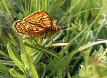 Бабочка в траве Стоковое Фото