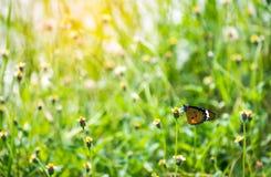 Бабочка в лужке Стоковое фото RF