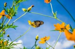 Бабочка в цветке Стоковые Изображения RF