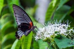 Бабочка в цветке Стоковые Фотографии RF