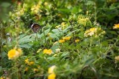 Бабочка в цветочном саде lantana Стоковые Изображения