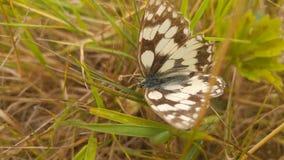 Бабочка в Kentish поле стоковая фотография