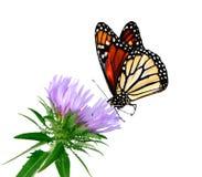 бабочка гладит рукой Стоковые Фотографии RF