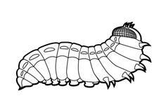 Бабочка гусеницы Стоковое Изображение