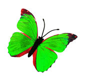 бабочка декоративная Стоковые Фото