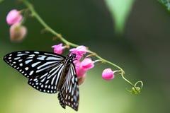 бабочка естественная Стоковые Изображения