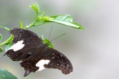 бабочка естественная Стоковые Изображения RF
