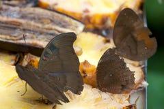 бабочка естественная Стоковое фото RF