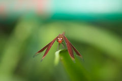 бабочка естественная Стоковое Изображение