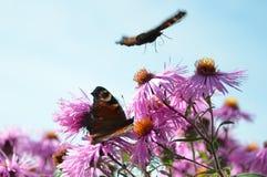 Бабочка летает от цветка Стоковые Изображения RF