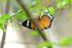 Бабочка летая к красивому цветку Стоковые Фотографии RF